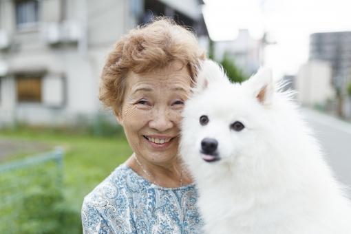 ジモティー,里親,犬