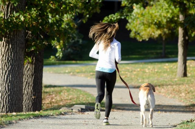 犬,留守番,散歩