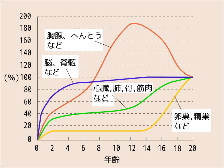 スキャモン発達曲線