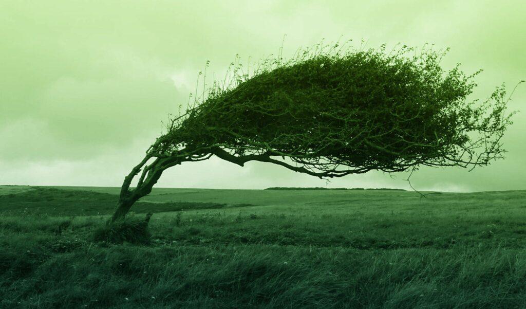 風の音,眠れない,強風