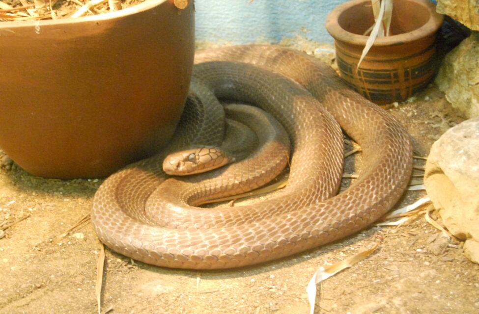 蛇が家の中に入ってくる